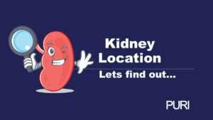 Kidney location